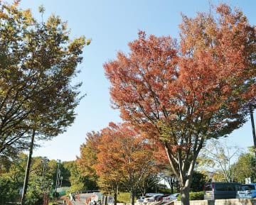 県立座間谷戸山公園=11月10日撮影