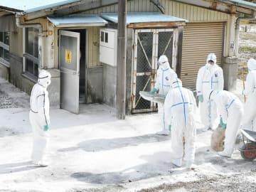 消石灰を手に豚舎内部の消毒に向かう作業員=16日午前11時52分、岐阜市椿洞、市畜産センター公園