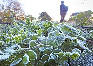 福島ひんや~り「初霜」観測 今季最低気温、平年より7日遅く