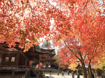 紅葉が見頃を迎えた西明寺で、国宝の本堂と三重塔は赤や黄、緑の色彩に包まれた(16日午前11時15分、滋賀県甲良町池寺)