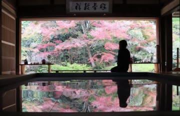 アクリル板に映り込む逆さの姿とともに、庭園のモミジを眺める「逆さ紅葉」=佐世保市、寿福寺