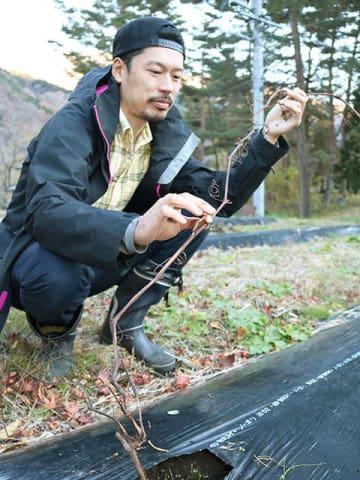 ワイン醸造を目指して今秋植えたヤマブドウの生育状況を確認する柴原孝治さん=白川村平瀬