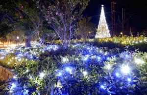 冬の勿来、希望の光で彩る 東田中央公園にLED3万個