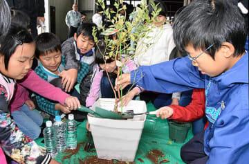 協力し合ってブルーベリーの苗木を鉢に植える子どもたち=17日、倉吉市越殿町のJA鳥取中央本所