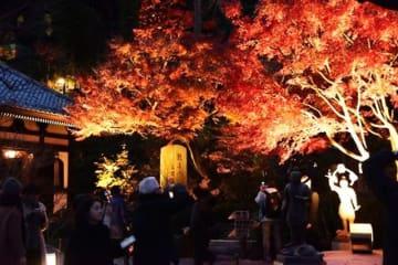 『鎌倉大仏』のある『高徳院』はもちろんのこと、定番の『鶴岡八幡宮』やアジサイで有名な『長谷寺』など、合わせて5カ所の寺社仏閣をめぐります。