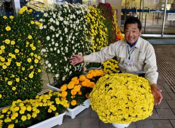 用務員さんの花