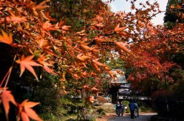 晩秋に境内を彩る紅葉=18日午前、那珂川町馬頭