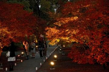 紅葉した木々がライトアップされた旧細川刑部邸=熊本市中央区