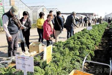 イタリア野菜の栽培展示コーナー=加須市阿佐間のトキタ種苗大利根研究農場