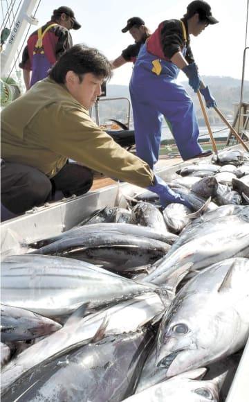 気仙沼漁港に水揚げされるカツオ=4月