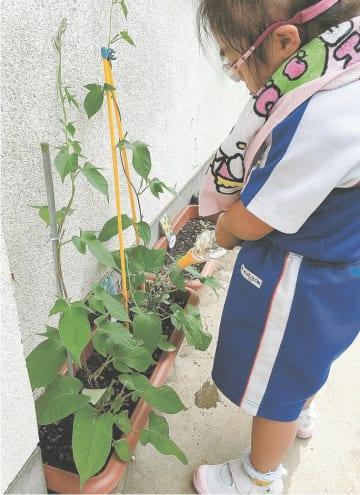 アサガオに水やりをする円田小の児童(星教諭提供)