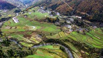 初冬を迎えた棚田の風景 陝西省巴山鎮