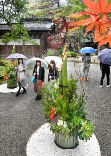 雨が降る中、境内に一足早く設置された門松=11月22日、福井県福井市田ノ谷町の大安禅寺