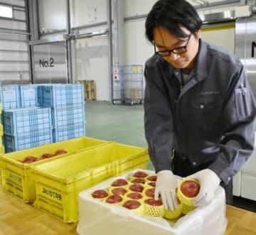 品質を確認しながら輸出用リンゴを箱詰めする職員