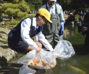 栗林公園の池に新たなコイを放流する児童=23日、高松市