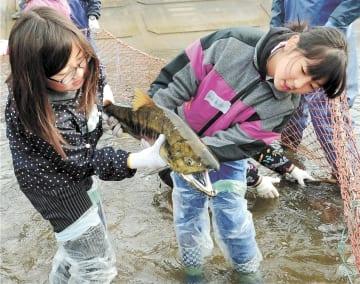サケを協力して捕まえた児童たち(写真の一部を加工しています)