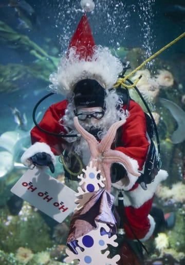 ダイバーがサンタに変身 バンクーバー水族館