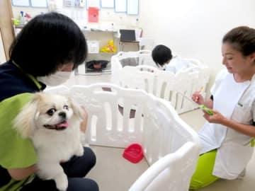 老犬などを預かるシニアペットケアステーション。24時間体制でスタッフがケアする(京都市西京区)