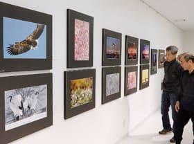 感性豊かなスナップや風景写真が並ぶ市民文化祭・写真展
