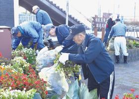 役目を終えた花を手で摘み取る参加者たち