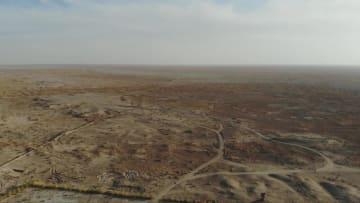 過去に絶滅の野生のモウコノウマ、60頭まで増加 甘粛省敦煌市