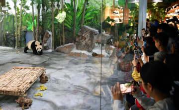 パンダの一般公開始まる 海南省海口市