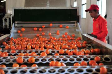 漂う甘い香り みかんの輸出がピークを迎える 湖北省宜昌