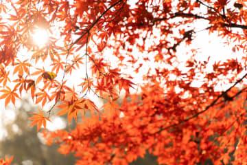 小春日和に輝く美しい岳麓山 湖南省長沙市