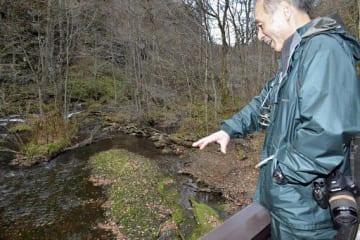 繁茂したカワシオグサが希少種チトセバイカモの群落に覆いかぶさっていると指摘する久末さん=26日午後、十和田市の奥入瀬渓流