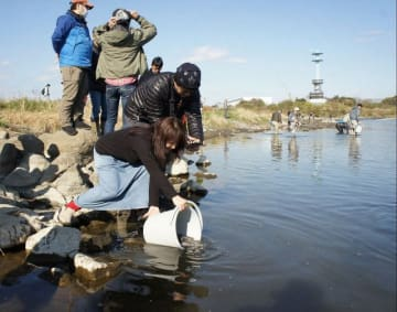 バケツに入れたヤマメを放流する参加者ら=相模川の三川合流点