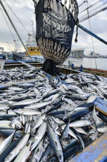 水揚げされたサバ=27日午前10時20分ごろ、八戸市第一魚市場