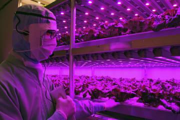 セブン―イレブン・ジャパンなどが公開したレタスの野菜工場=28日午後、相模原市