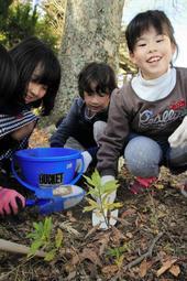 ケヤキの幹の近くで根の上の硬い土を掘る児童=いずれも三田小学校