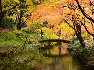 「六義園」渡月橋の紅葉