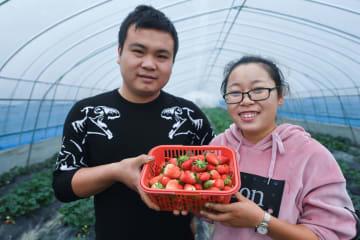 収穫期を迎えたエコ農場 浙江省湖州市