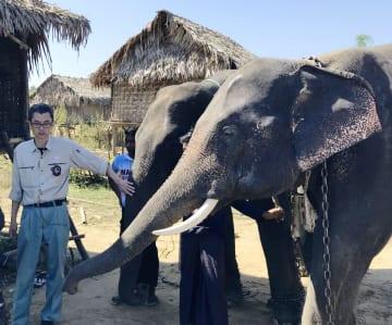 札幌市円山動物園への運搬を前にミャンマーで撮影されたアジアゾウ=11月29日(同動物園提供)