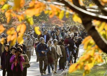 皇居・乾通りの一般公開が始まり、見頃となった紅葉を楽しむ人たち=1日午前