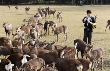 奈良公園で始まった「鹿寄せ」=1日午前、奈良市