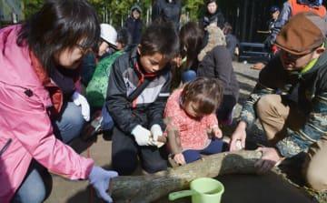 【アカメガシワの原木にヒラタケの菌を打つ親子ら=亀山市加太梶ケ坂の亀山森林公園「やまびこ」で】