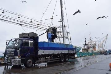 巻き網船団が漁獲したサバの水揚げ作業=1日、八戸市第1魚市場