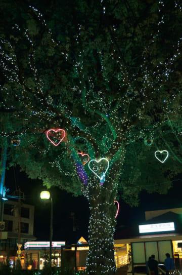 北久里浜商店街 ハート煌めくクスノキのイルミネーション(横須賀市)