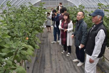 ホオズキ畑で蓬田茂代表(手前)の説明を受ける見学者=高萩市大能