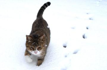 【応募〆迫る】あなたの猫写真、展示しませんか?「ねこ写真展2019」大佛次郎記念館(横浜)