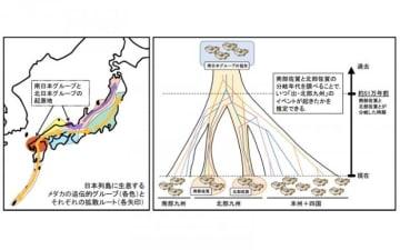 研究の概要。(画像:岡山大学発表資料より)