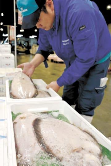 入荷が本格化したナメタガレイ=4日午前5時20分ごろ、仙台市若林区の市中央卸売市場