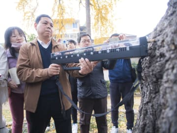 樹齢500年余りのイチョウ古木が「健康診断」 湖北省武漢市