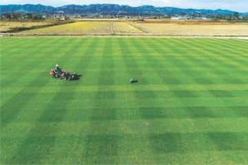 丹念に育てられている「復興芝生」。ここにある約1ヘクタールの芝は全て、東京五輪のために宮城スタジアムに敷き詰められる=山元町山寺