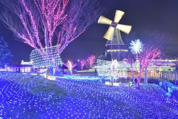 幻想的な光に包まれる霞ケ浦総合公園のイルミネーション=土浦市大岩田