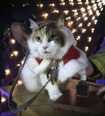 조명 점등식에 고양이 역장 출근