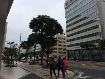 沖縄地方も風が強く、少し冷え込んできました